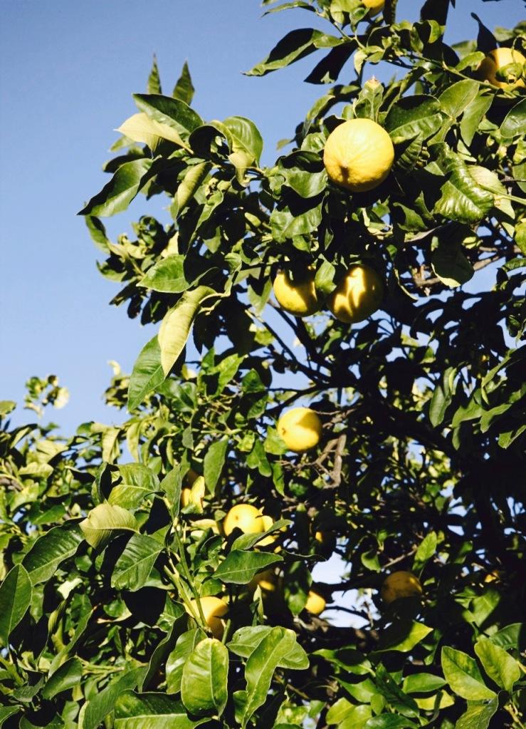 Die Bergamotte wird in Kalabrien exklusiv für Zegna angebaut.