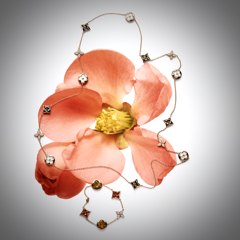 LV - Blossom Still Lives © Iris Velghe - 8 sur 9